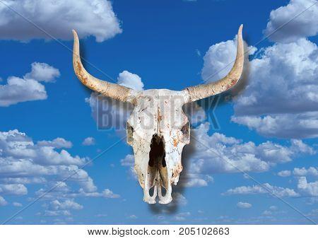 Cow skull in the blue sky heavens.