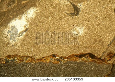 Thin Section Of Triassic Carbonate Under The Microscope