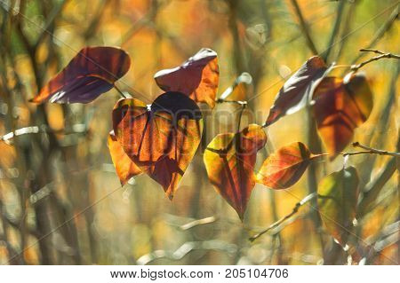 Colorful autumn leaves backlit on a beautiful background