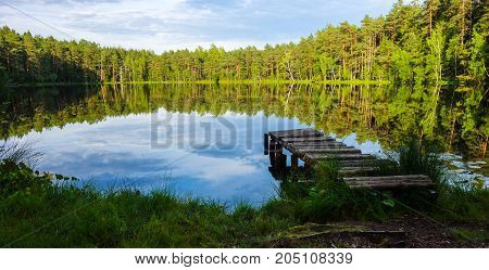Natural and relaxing bog background view in summer