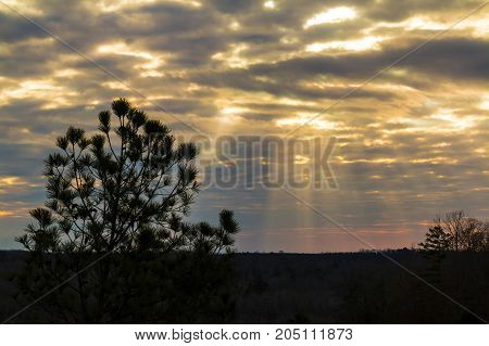 Evening landscape with pine tree and sunlight making its way through clouds