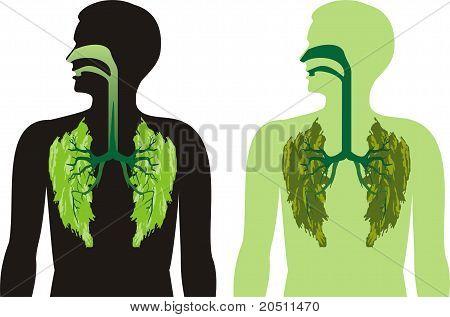 Green lung lobes - breathe deepl