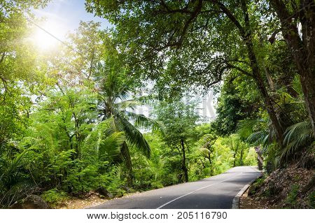 Seychelles. The road to palm jungle. Tropical Paradise.