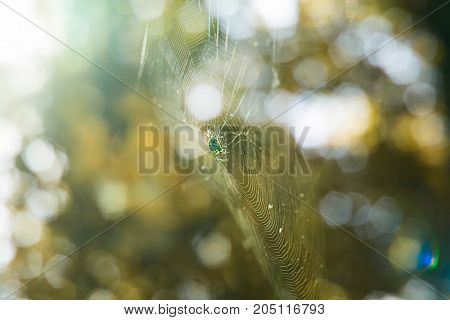 spider on a cobweb in the daytime is brightly illuminated by the sun