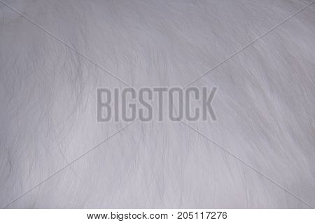 white fur texture full background made of cat fur