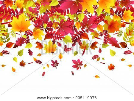 Vector illustration of autumn border background with falling multi colored oak, rowan, maple, birch, willow, chestnut, ash leaves like leaf fall in bright flat style isolated on white background