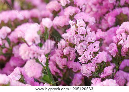 Beautiful flowers background decoration for wedding scene
