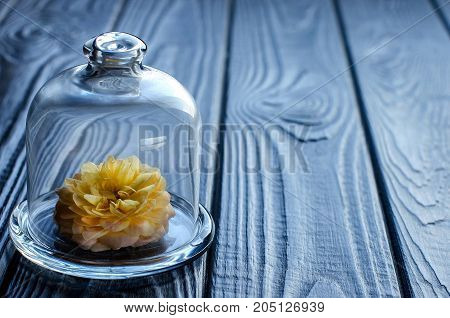 Living Flower Under Glass Cap