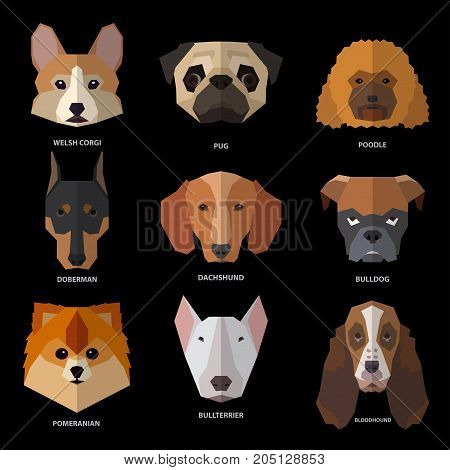 Dogs heads of different breeds. Vector illustration set for your cute design.