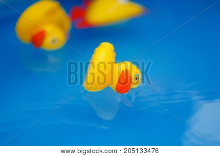 Yellow duck. Inverted yellow duck in blue water.