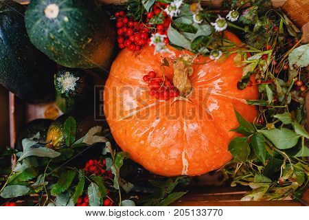 Autumn picking of vegetables: pumpkin, mountain ash, zucchini in a wooden box