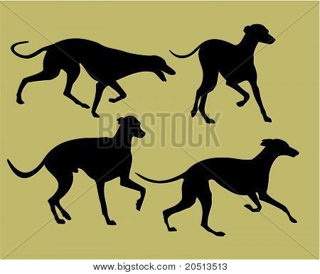 Silhouettes Of Greyhounds.