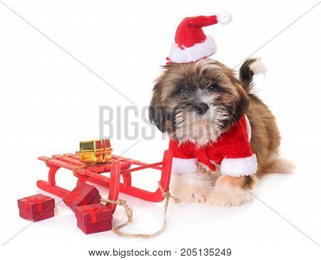 dog and christmas decoration in front of white background