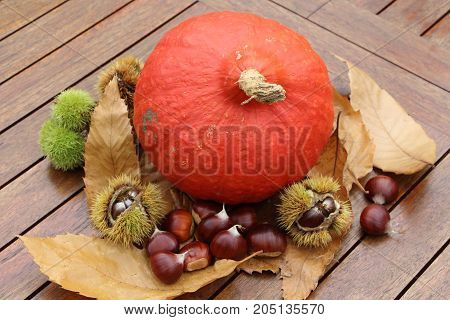 Chestnuts husk pumpkin and dead leaves on a wooden table after harvest during autumn