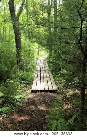 Hiking path through the woods with wooden planks over swampy lowlands on an early spring day.