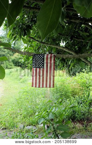 Small American flag hanging from a tree branch just off a walking trail on a cloudy day.