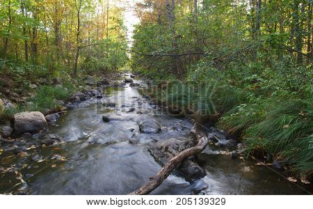 forest river water creek landscape outdoor peaceful panorama