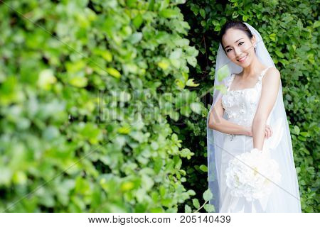 beautiful young woman on wedding day in white dress in the tree wall. Female portrait in the park - Selective focus.