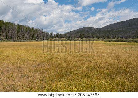 Grassy Marsh In Colorado