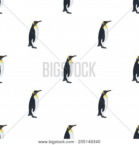 Penguin, flightless sea bird. The Imperial Penguin single icon in cartoon style vector symbol stock illustration .