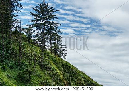 Trees In A Green Hill With Blue Sky And Clouds.