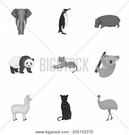 Ostrich emu, crocodile, giraffe, tiger, penguin and other wild animals. Artiodactyla, mammalian predators and animals set collection icons in monochrome style vector symbol stock illustration .