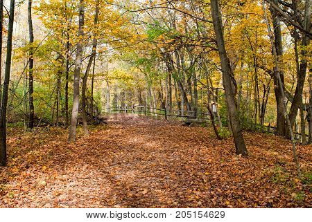 Scenic autumn trail in woods with split-rail fence.