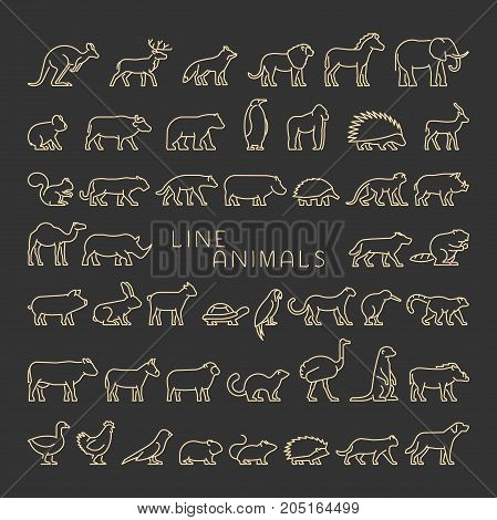 Linear set silhouettes of domestic farm forest and wild animals. Line icon chicken cow hedgehog cat dog and others.