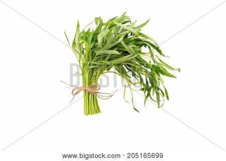 Tied up spring tarragon isolated on white background