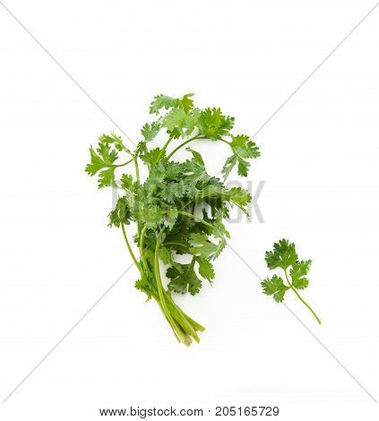 Bunch of green parsley isolated on white background