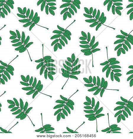 Hand drawn seamless pattern with green rowan, ash tree leaves, sketch style vector illustration isolated on white background. Hand drawn rowan leaves, seamless pattern, backdrop, textile design