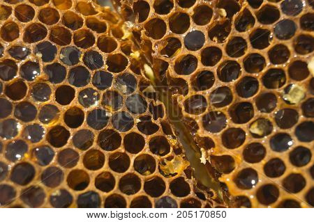 Brown honeycomb with sweet honey background texture