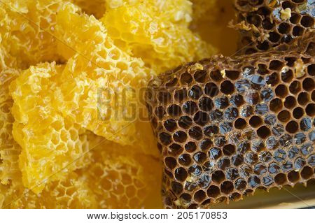 Yellow and brown honeycombs with sweet honey as a background close up