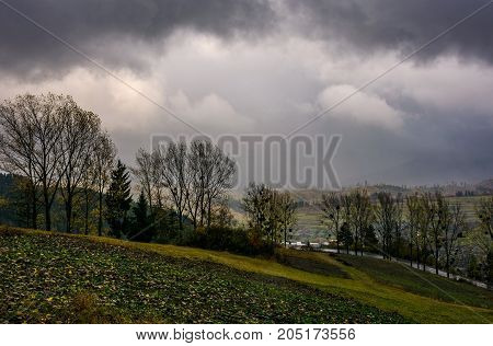 Trees On Hillside In Rainy Weather