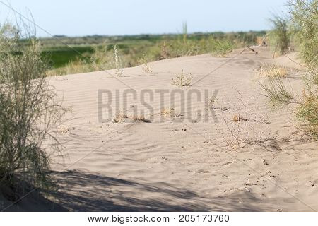 plants in the sand in the desert .