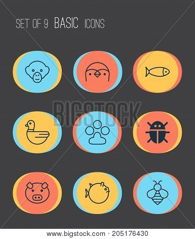 Zoology Icons Set. Collection Of Fish, Claw Print, Bumblebee And Other Elements