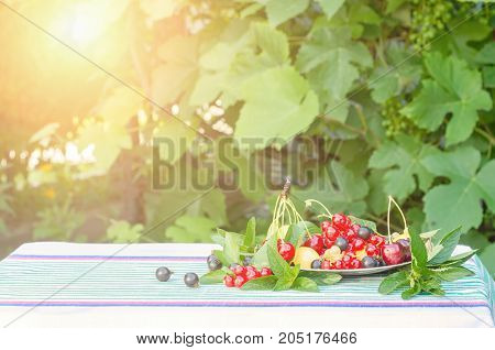 Berries of cherry black and red currants in a plate with mint leaves on a table with a tablecloth. The lights of a sun.