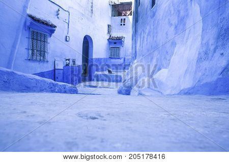 Pets on Street in medina of blue town Chefchaouen Morocco