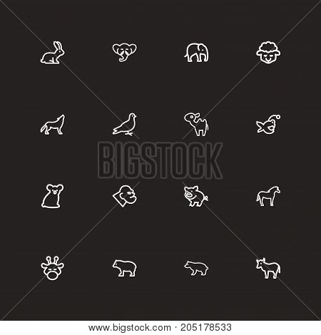 Set Of 16 Editable Animal Outline Icons. Includes Symbols Such As Kine, Pigeon, Fish And More