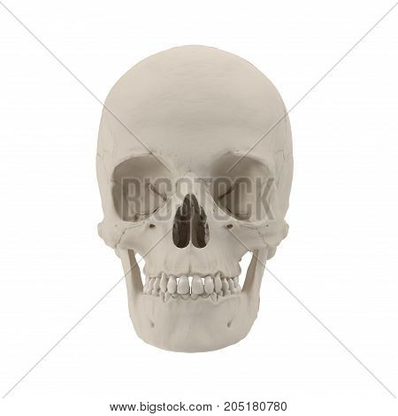 Female Human Skull on white background. 3D illustration