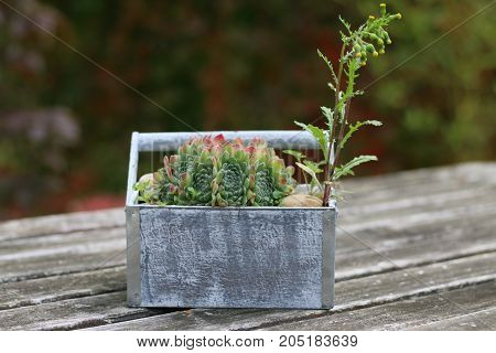 Close up of a cactus with a wooden table.