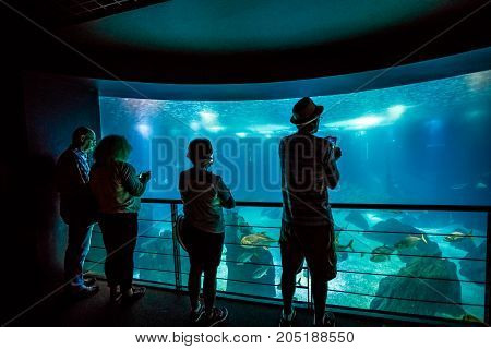 Lisbon, Portugal - August 24, 2017: people watching spectacular central tank of Lisbon Oceanarium, in Parque das Nacoes, one of the largest aquarium in the world.Tourism, holidays and leisure concept