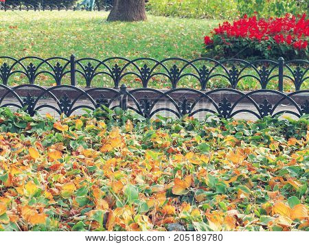 Yellow Autumn Leaves Of Plants And Grass On Urban Lawns And Flowerbeds As Background