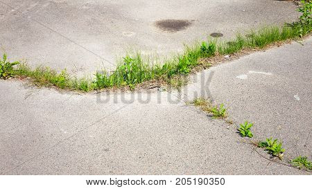 Green Grass Sprouted Through The Asphalt On The Old Abandoned Road In The Background