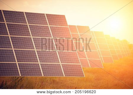 Solar panels in the field at sunset