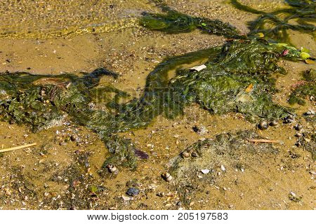 Green Algae In Water. Water Pollution. Ecological Problem