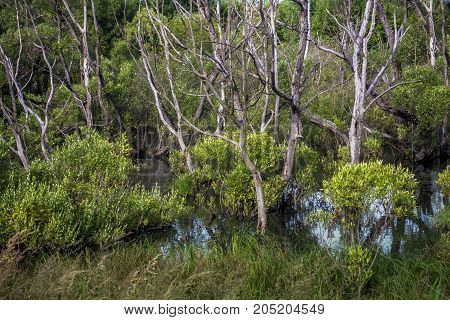 Dry trees in water among green bushes. Wild nature background. Ecology problems
