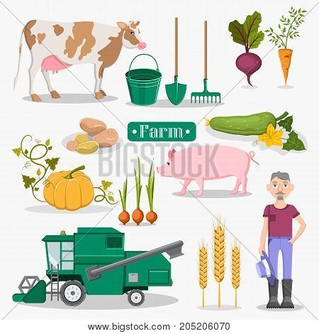 Farm vegetables, healthy livestock, convenient equipment, last model combine-harvester, golden spikes and old farmer set of vector illustrations.