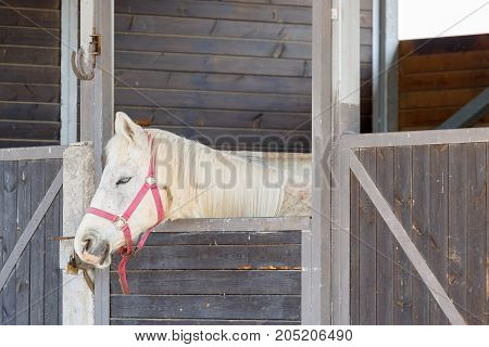 White Horse With Pink Bridle