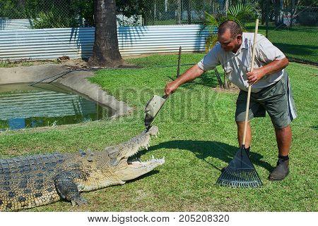 JOHNSTONE RIVER, AUSTRALIA - NOVEMBER 06, 2007: Crocodile farmer Mick Tabone plays with the reptile kept behind the fence in Australia in Jonston River, Australia.